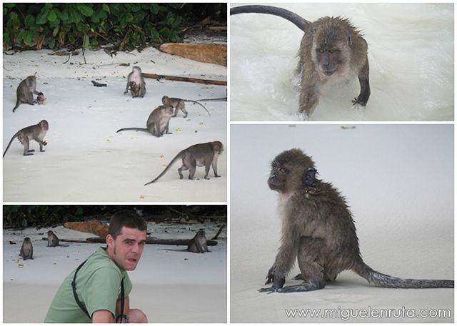 Monkey-Island-Tailandia