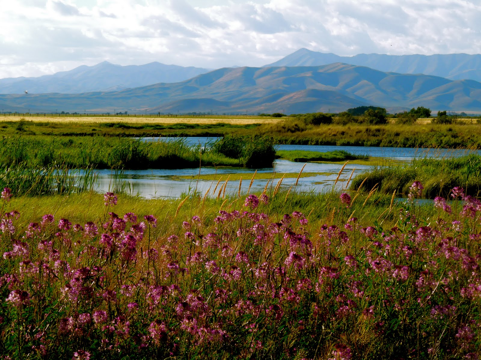 Idaho nature notes vote for the silver creek 35th for Silver creek idaho fishing