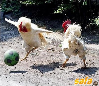 Worlds Most Funniest Animals Photos 5