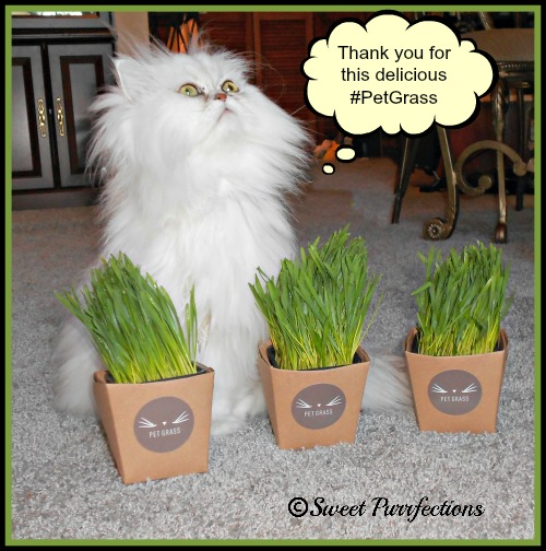 Brulee is thankful for her #PetGrass