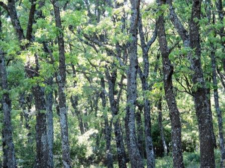 Dehesa de la Golondrina (Navacerrada) IMG_4111