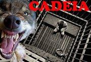Cadeia para quem maltrata animais!