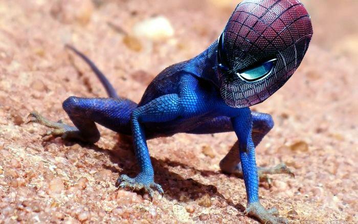 calango-aranha