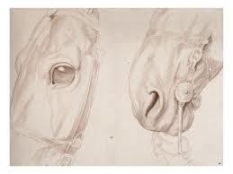Deux études partielles d'une tête de cheval bridée, sculptural study by Edme Bouchardon