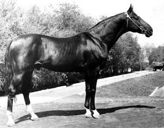 конь Абсент