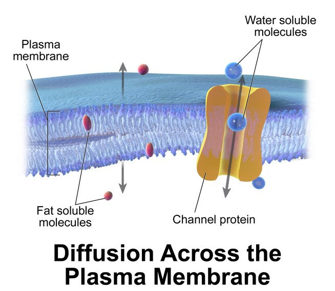 Pengertian dan Penjelasan Mengenai Plasma