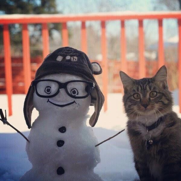cute cat, cat photos