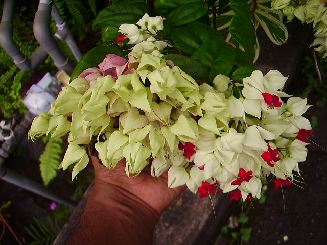 Garden chronicles hardy flowering plants for Hardy flowering trees