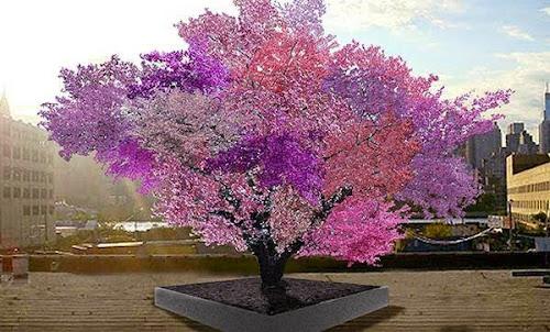 A Árvore das 40 frutas