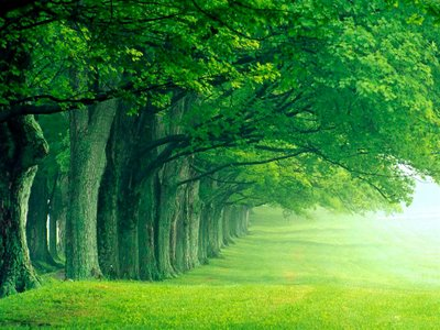 hijau2 si pokok
