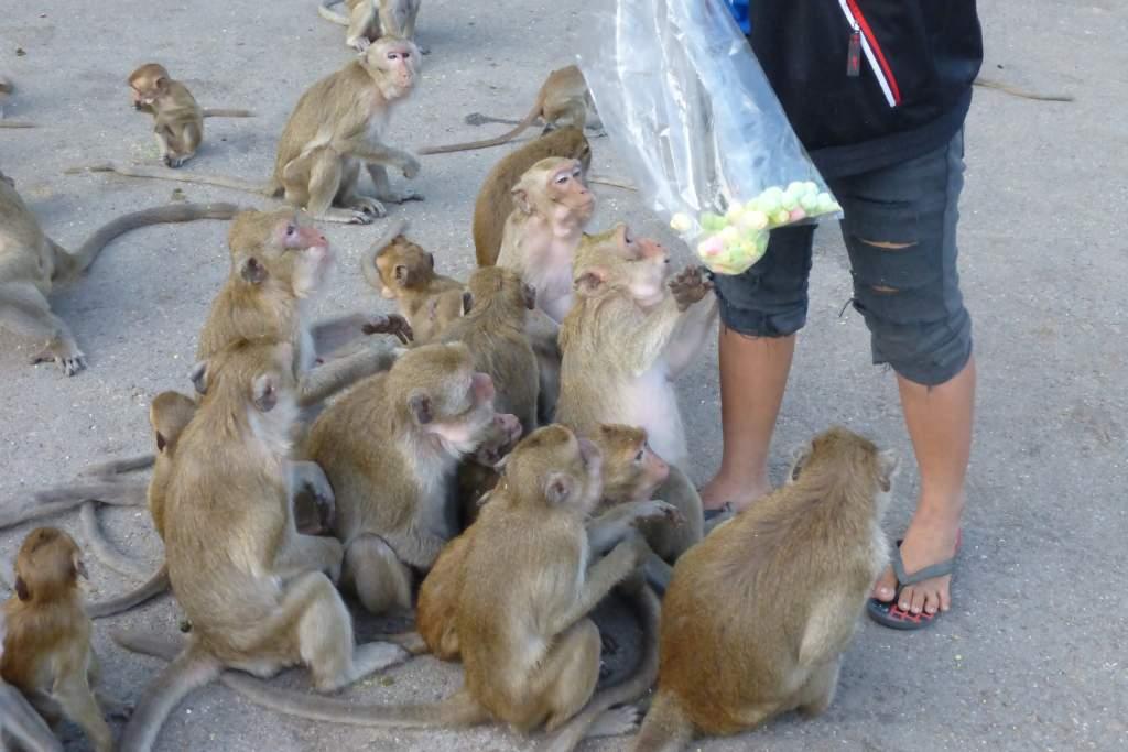 Bonny Und Woga Unterwegs 27112015 Ausflug Zum Wat Kiriwong Und