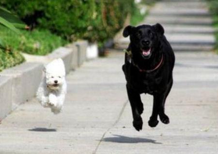 AudsBlogs: Dogs are th...