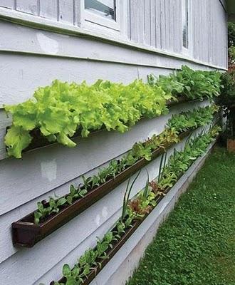 191 004 Como montar uma horta em casa   Fotos e modelos