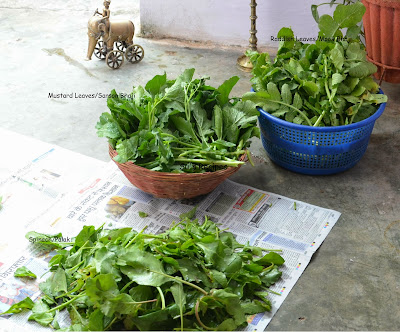 mustard leaves radish leaves raddish leaves spinach leaves