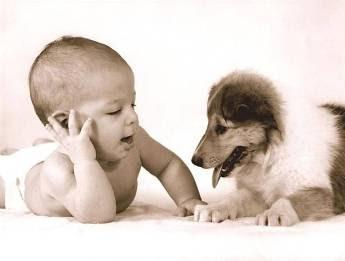 Bebês e Bichinhos