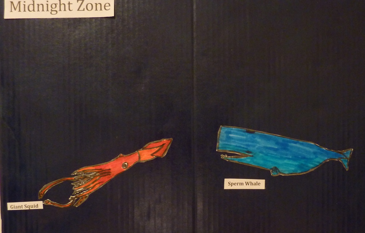 the miss rumphius effect book inspired science fair project as you can see he spent quite a bit of time creating the animals for each of the zones if he hadn t been restricted as to space i think he would have