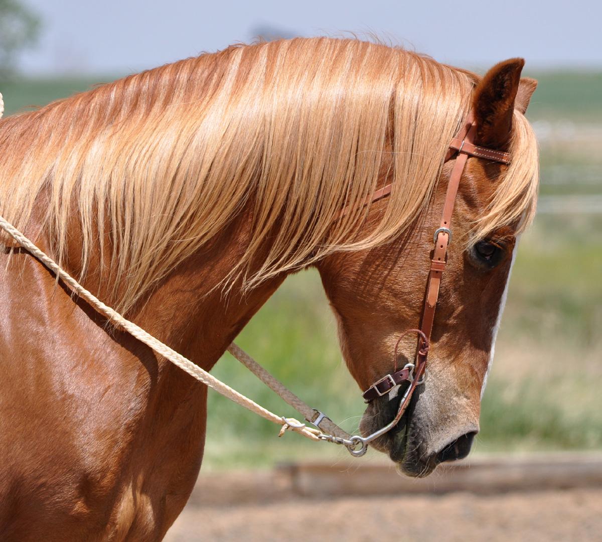 Bitadvies gecertificeerd paardentandarts Utrecht