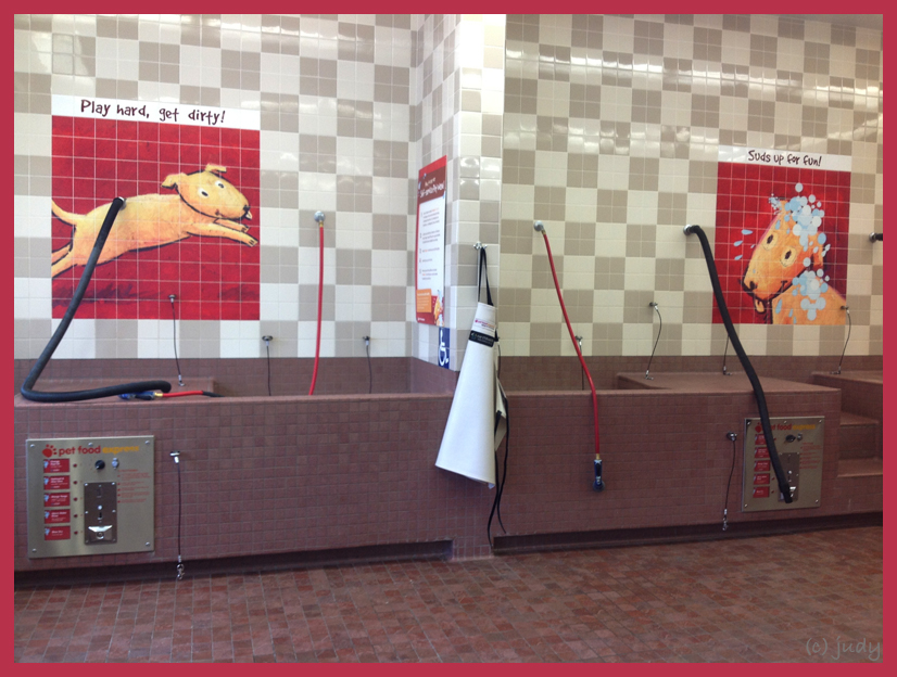 Bailey unleashed self service dog wash self service dog wash while up in carmel daughter 1 took us to a pet shop called pet food express because in this store there is a pet wash solutioingenieria Gallery