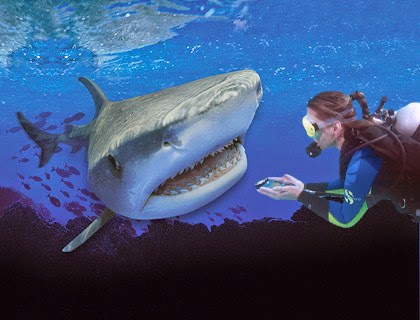 diver with compass swimming into shark's mouth