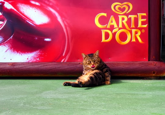 Carte d'Or cat