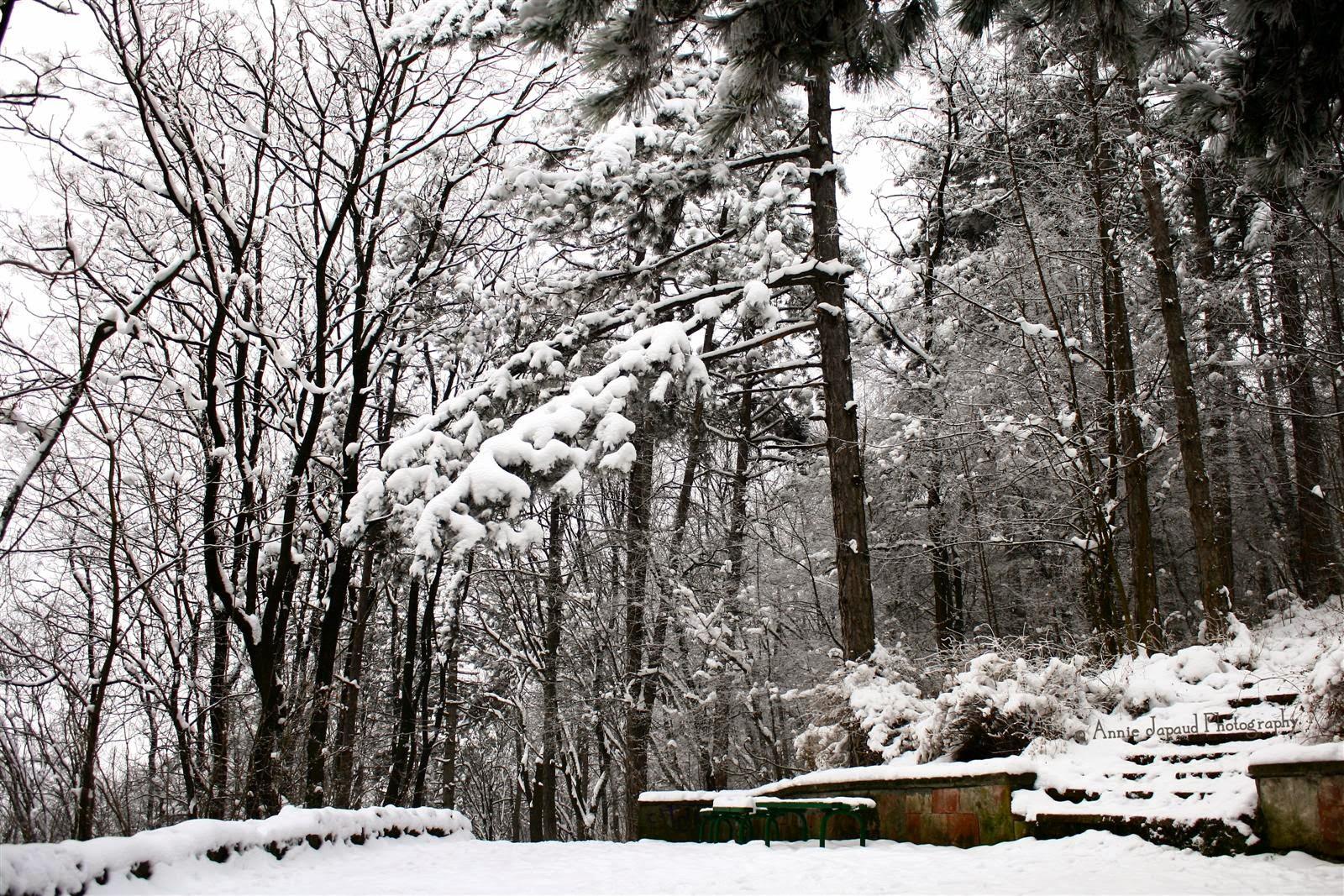 snow landscape, Vratsa Bulgaria