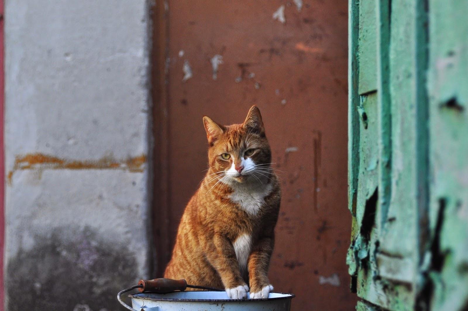 rudy kot