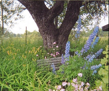 Old Apple Tree and Delphiniums