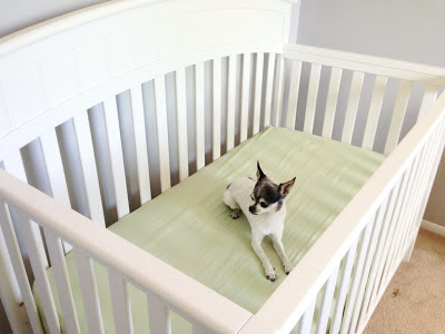 dog in crib