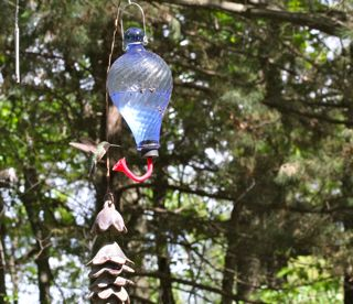 photo of hummingbird at feeder