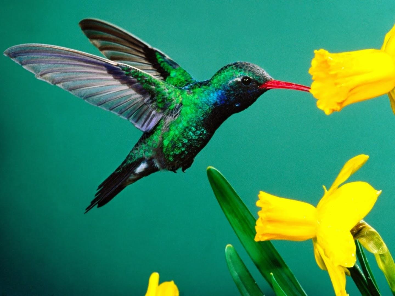 ¿El colibrí es de buena suerte?
