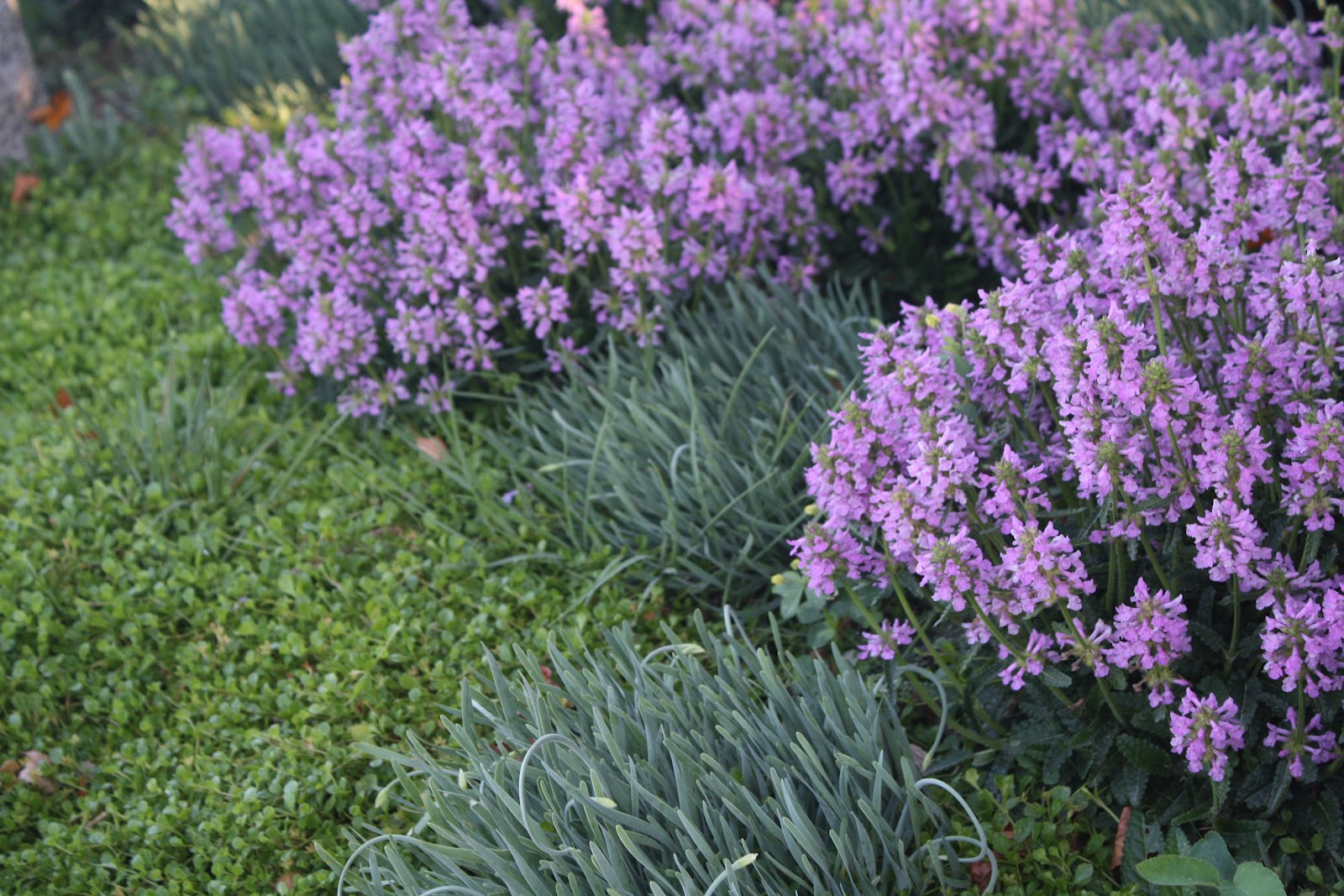 MIDWEST GROUNDCOVERS Display Gardens & Plant Trials Drought Tolerant Plants