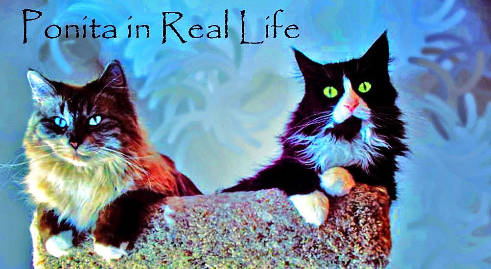Ponita in Real Life