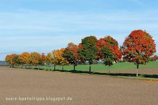 susis basteltipps mit stampin up: herbstliche Baumreihe