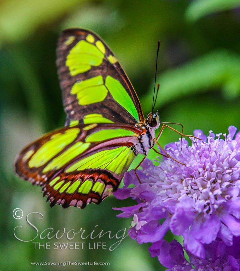 Butterflies Fluttering By San Diego Safari Park