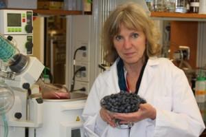 Hasil gambar untuk manfaat blueberry untuk penglihatan mata green world