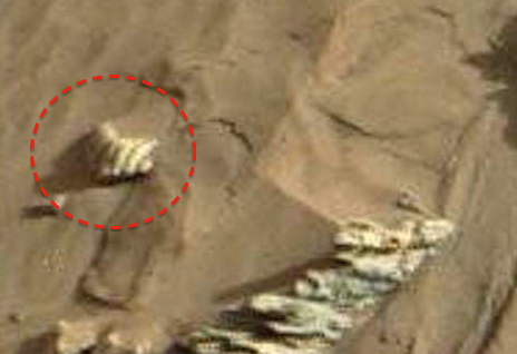 Sea Shell Has Been Discovered On Mars 2015, UFO Sightings