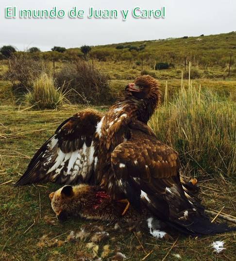 Serie documental Aves de España 2.0