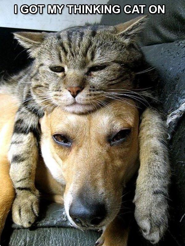 Thinking+Cat.jpg