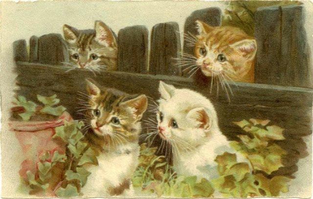 Les 495 meilleures images du tableau chat sur Pinterest