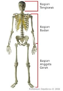 rangka manusia