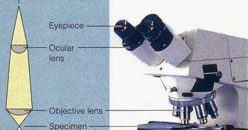 Bagian bagian mikroskop cahaya monokuler mikroskop sketsa