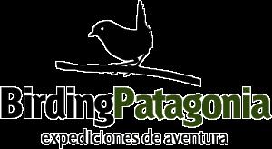 Birding Patagonia