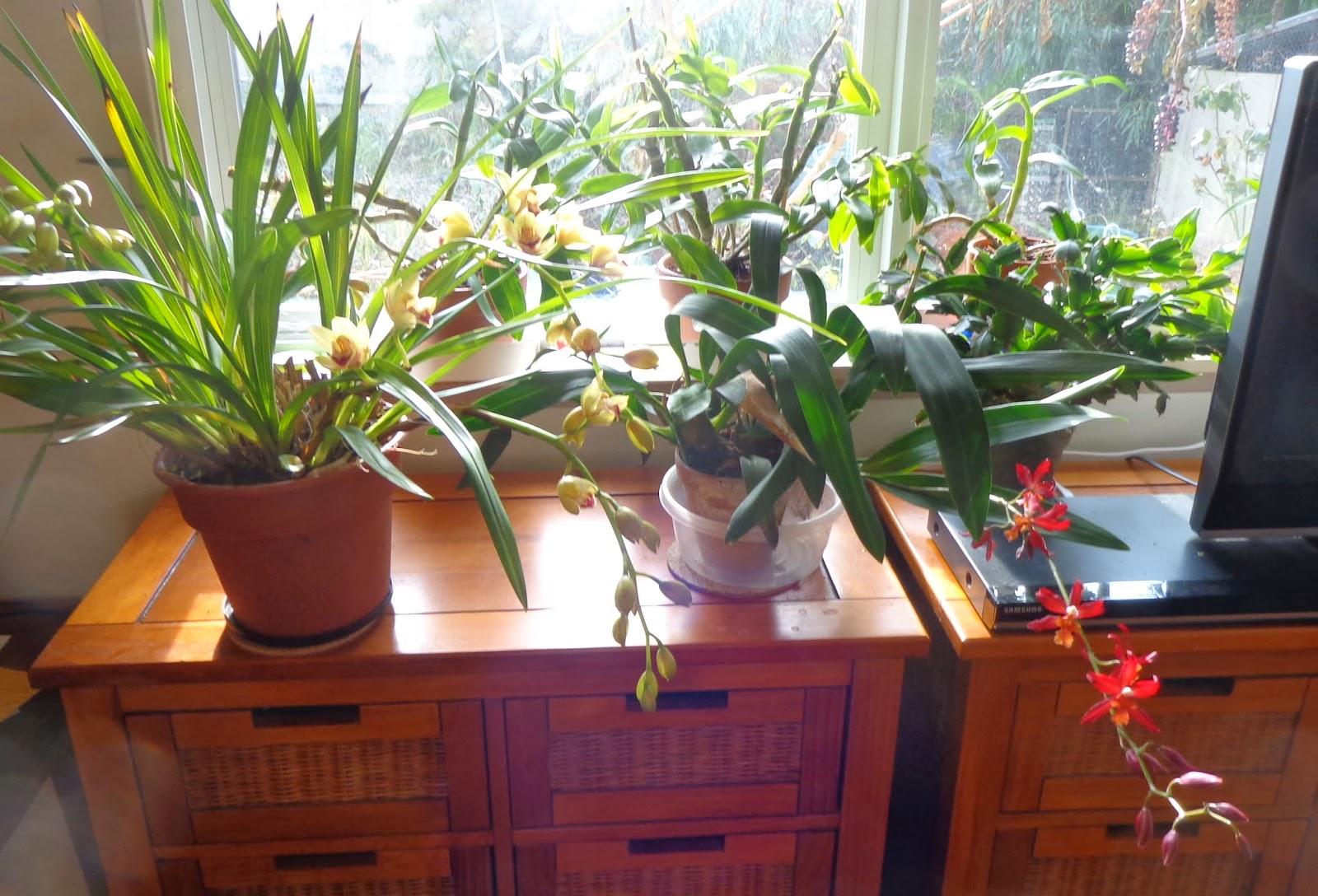 Growing greener in the pacific northwest indoor garden for Indoor gardening rainier oregon