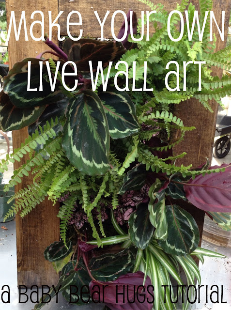 living wall art DIY tutorial framed indoor garden grovert