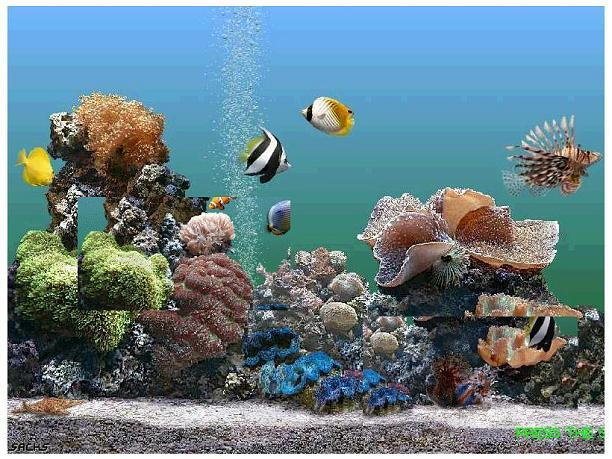 Fish n tips large aquarium fish saltwater for Large ocean fish
