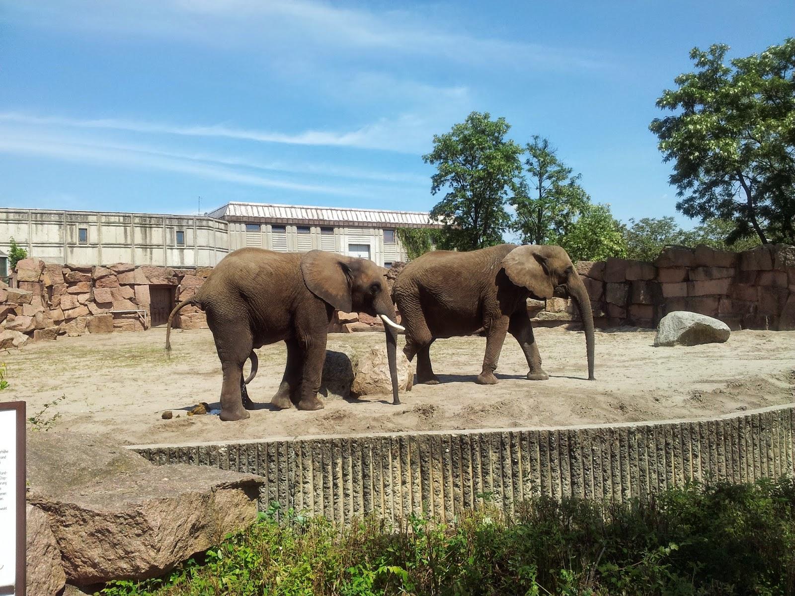 Runzelfuesschen Besuch im Tierpark