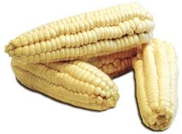 Choclos o maíz