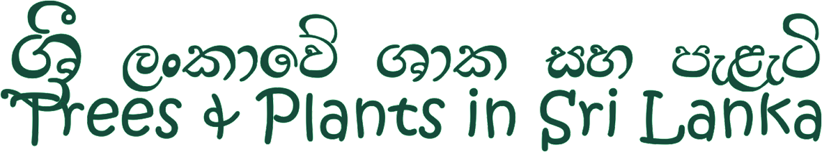 Trees and Plants of Sri Lanka