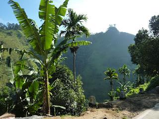 les fleurs et la flore au Sri Lanka