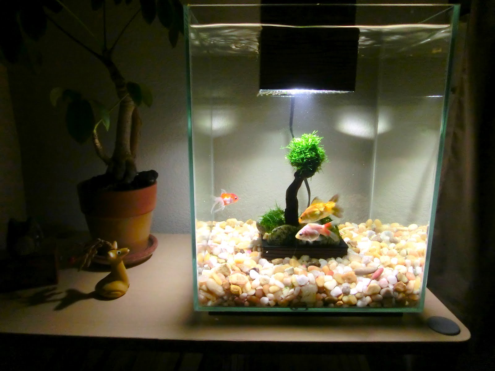 Make It Easy My New Aquarium